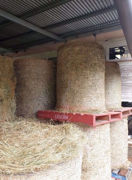 "Picture of Round Bales 3"" Grassy Lucerne"