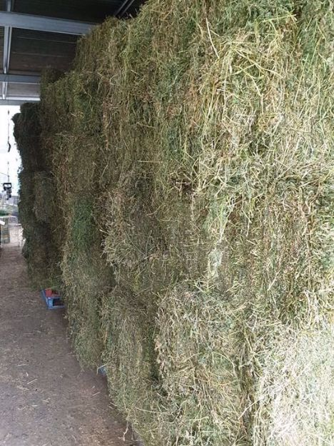 Picture of Sheded Prime Lucerne Square Bales
