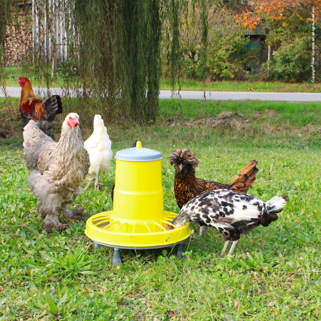 Picture of Supreme  Poultry Feeder